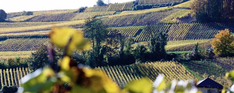 Le tour du monde des vignobles par KAYAK.fr